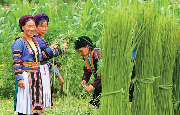 Biểu tượng của dân tộc Mông